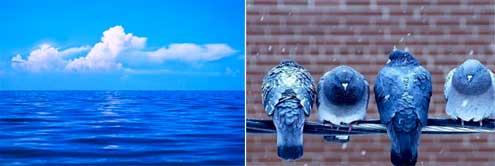 Blue-sky-birds