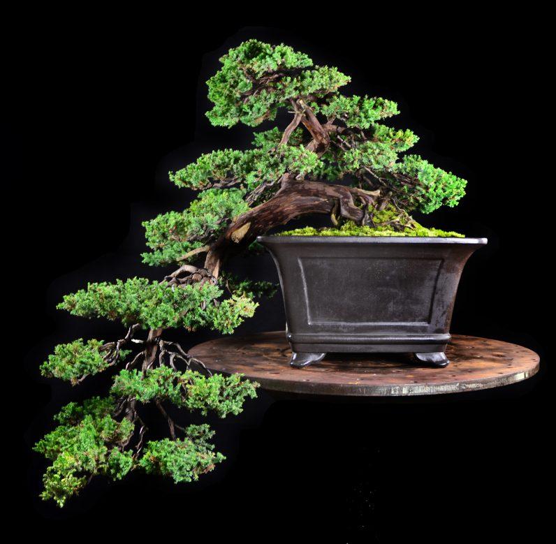 idesign nhom nghe si danh ca doi de trong cay bonsai 2