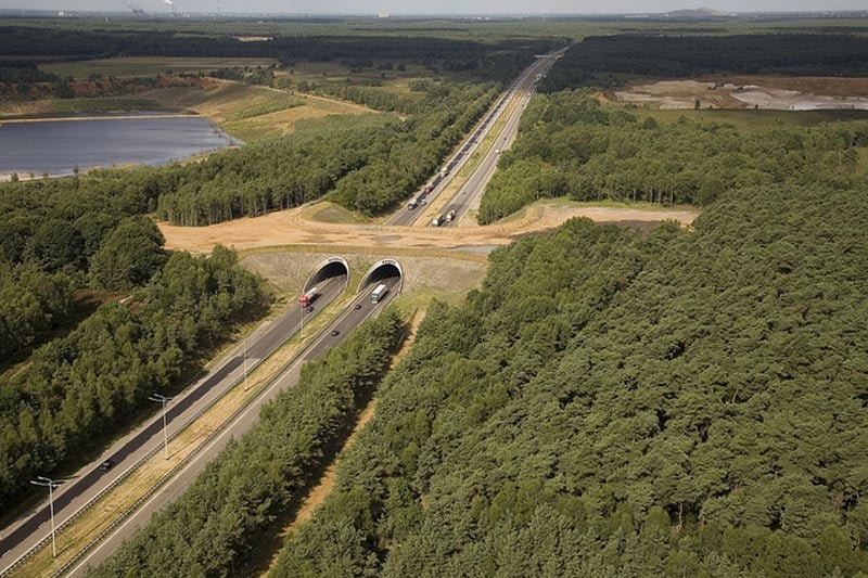 wildlife crossing belgium