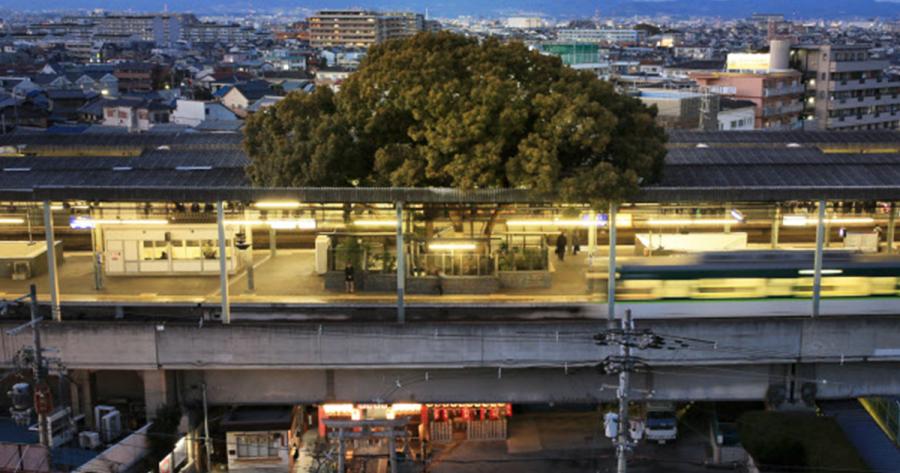 cette gare japonaise a ete construite autour dun arbre de 700 ans et voici pourquoi 12511