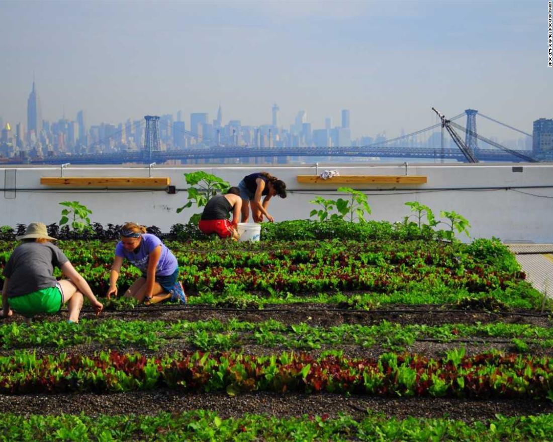 180301115513 10 urban farms custom 54