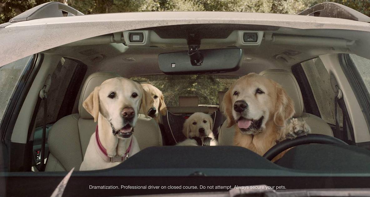 """Bạn đã bao giờ thấy """"Chó lái xe""""?"""