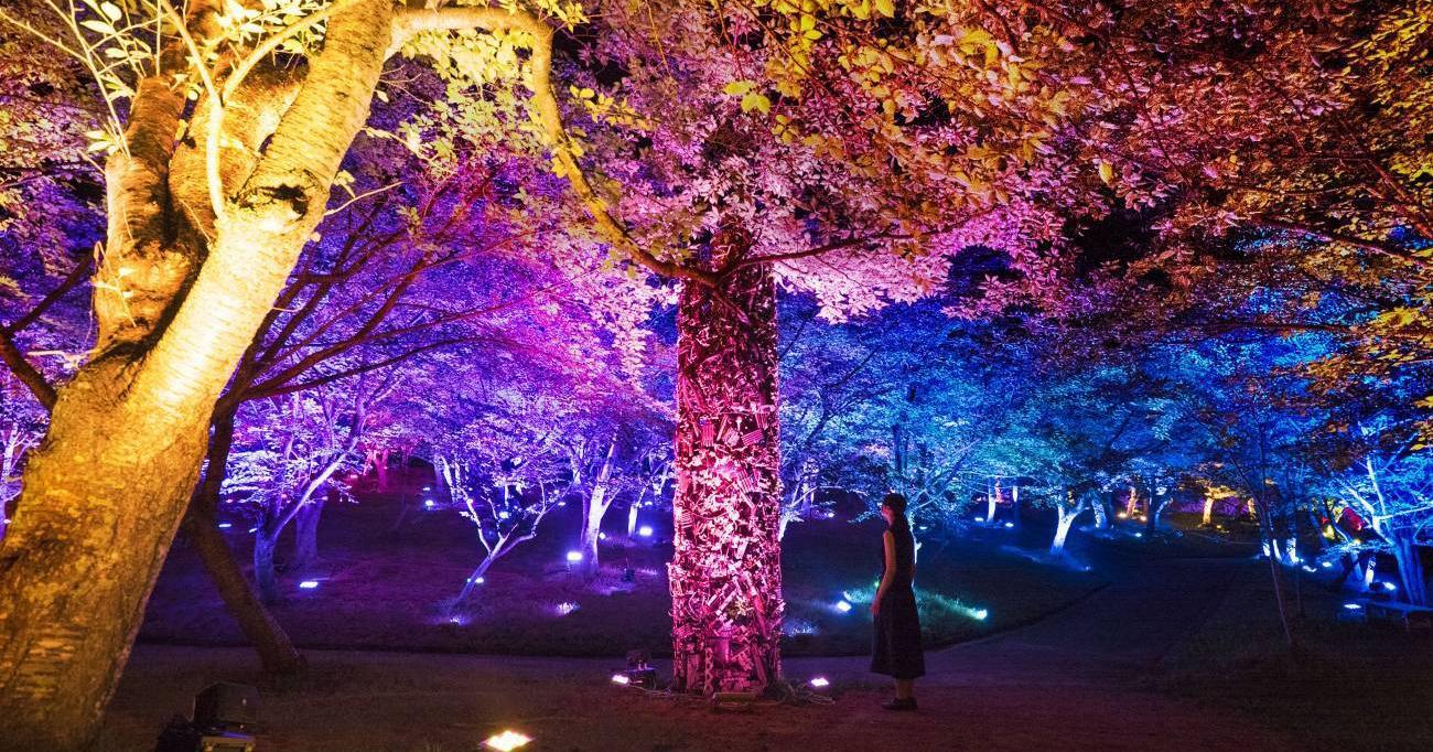 Teamlab biến công viên Nhật Bản thành khu rừng cho Thượng Đế sinh sống