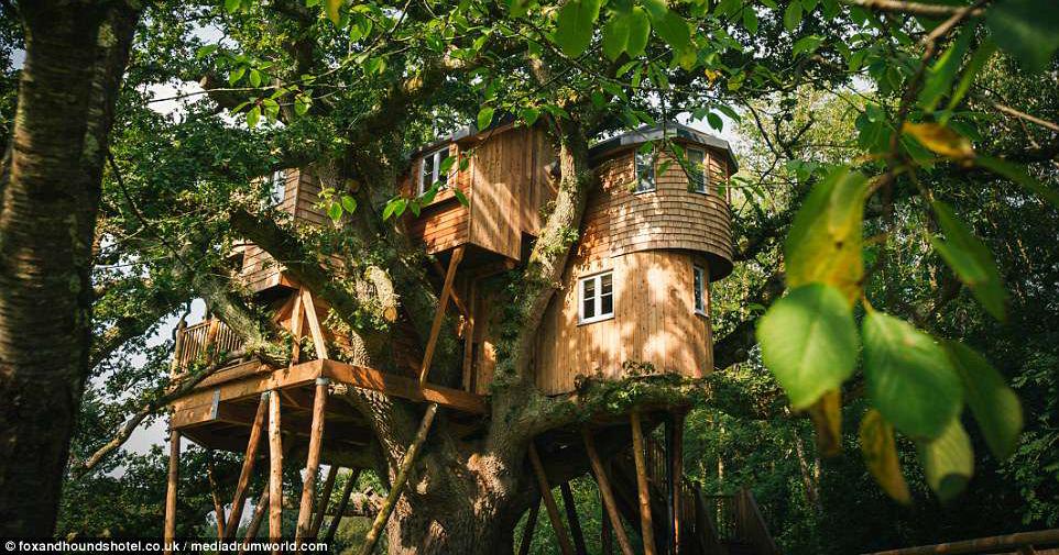 Treetops - Nhà cây lớn nhất nước Anh trên cây sồi 250 tuổi