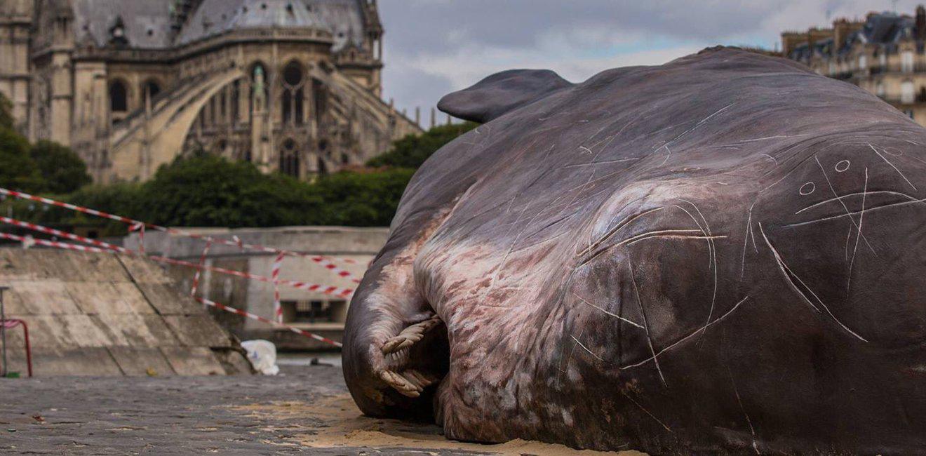 Làm thế nào một chú cá voi lại mắc kẹt trên bờ sông Seine?