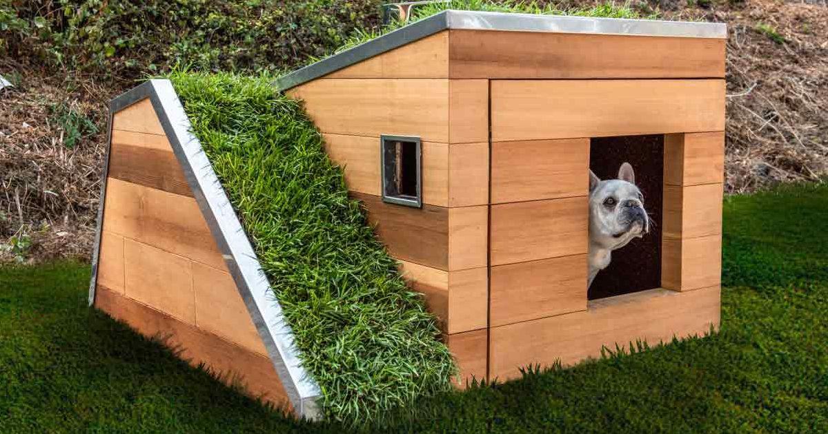 Ngay cả cún yêu cũng có mái nhà xanh