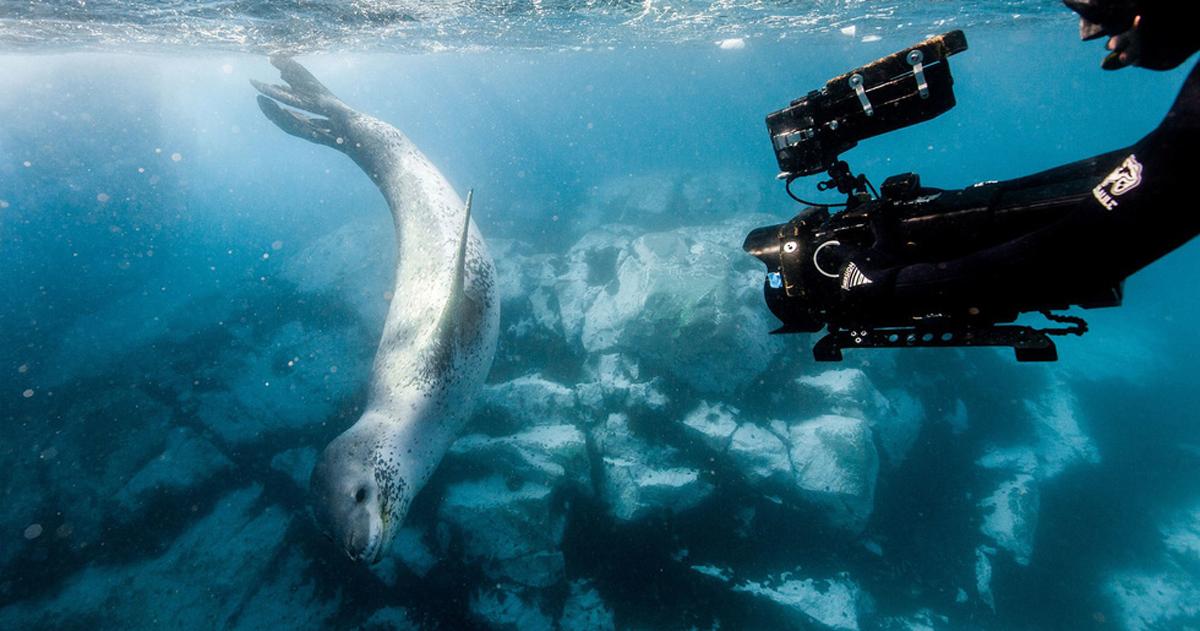 Choáng ngợp và đau đớn những cảnh báo về môi trường từ loạt phim Our Planet