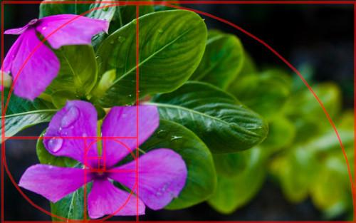 5 kĩ thuật chụp ảnh cơ bản cần nắm cho người mới
