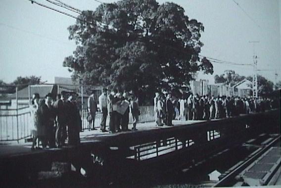 kayashima station tree 1968