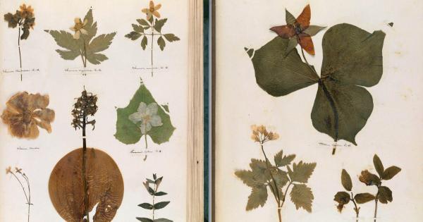 Emily Dickinson cùng báu vật ở ngã giao giữa khoa học và thơ ca