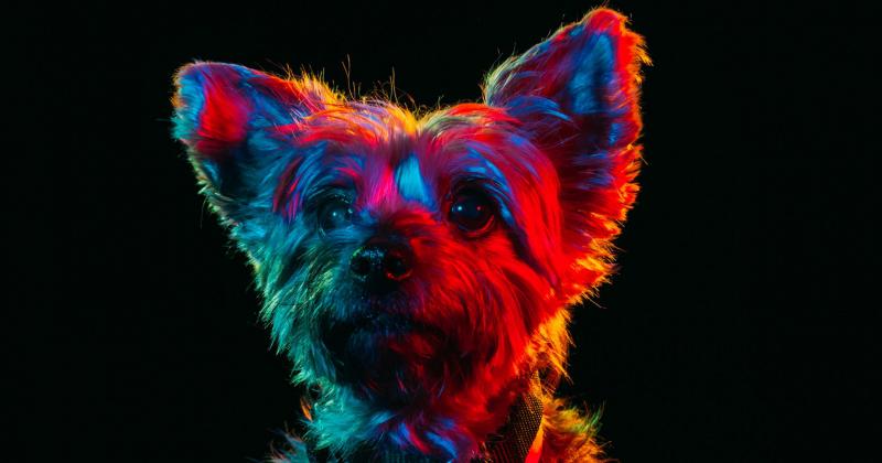 Loạt ảnh chân dung đầy màu sắc của những chú chó lang thang được nhận nuôi