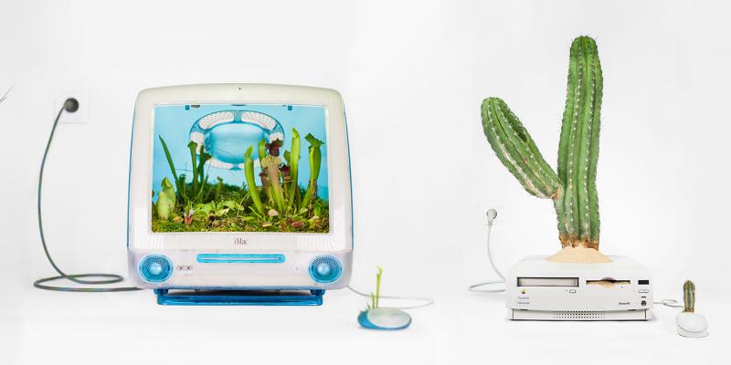 Christophe Guinet - trồng cây trong máy tính Apple