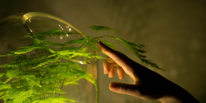 Living Light - biến cây xanh thành cây đèn trong đêm