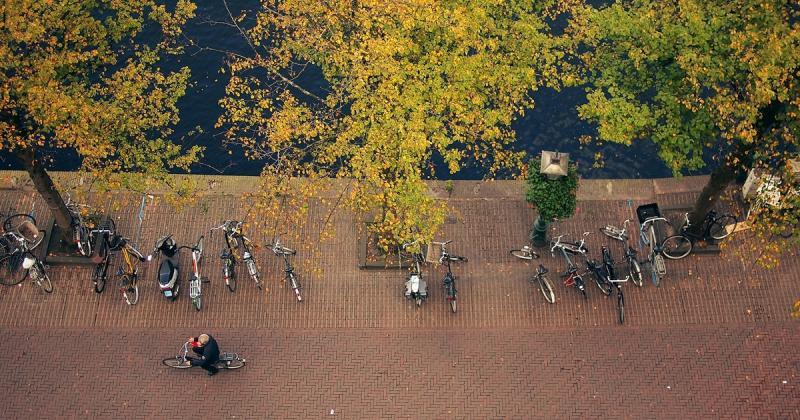 """Những cái cây trong thành phố: """"Hãy cho chúng tôi thêm chút không gian."""""""