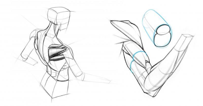 12 lời khuyên cần biết cho luyện tập vẽ giải phẫu người
