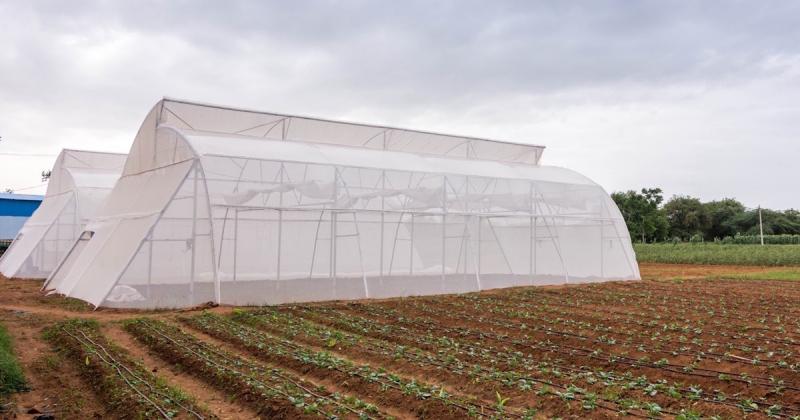 Nhà kính trồng rau kiểu mới giúp người nông dân Ấn Độ đối phó với biến đổi khí hậu