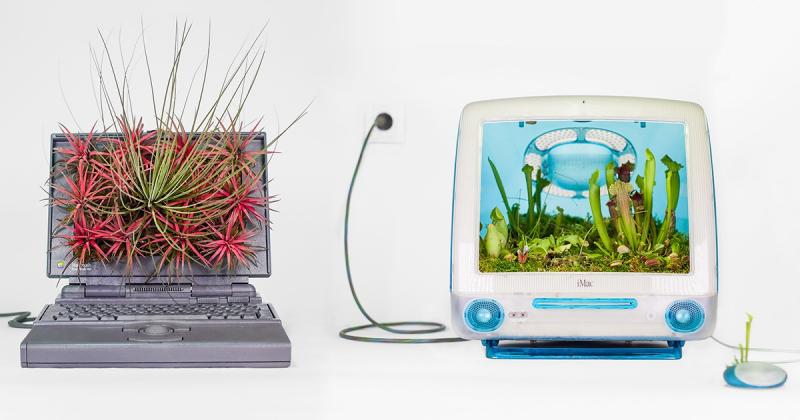 """Những tác phẩm chậu cây """"đẹp, độc, lạ"""" trên các dòng máy tính cổ điển của Apple"""