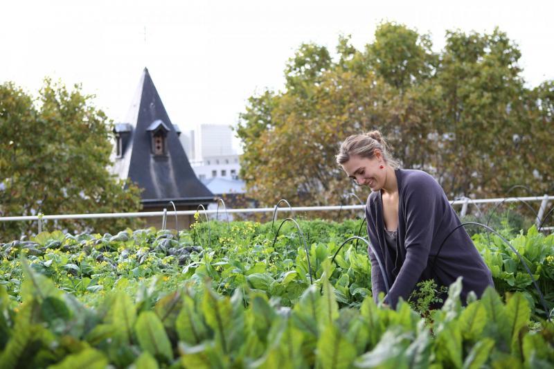 Khi người Paris đi làm nông