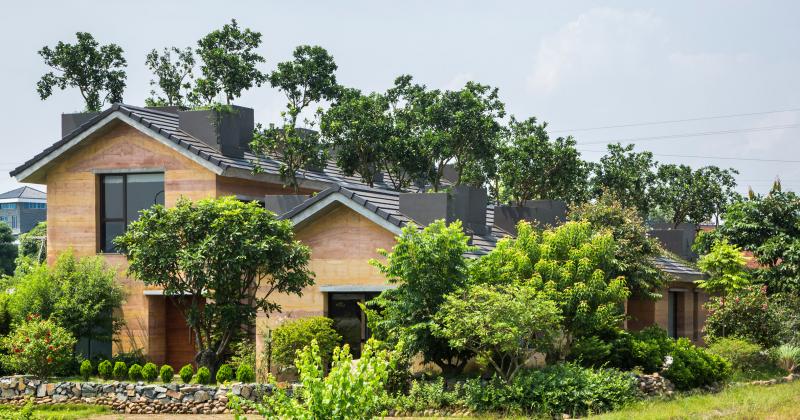 KTS Võ Trọng Nghĩa trồng cây ăn quả trên mái nhà