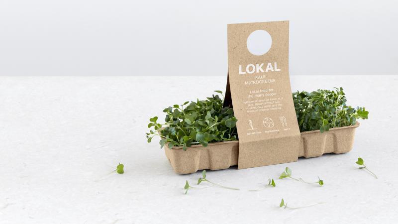 Lokal - trồng rau không cần đất, rút ngắn khoảng cách từ nông trại đến bàn ăn