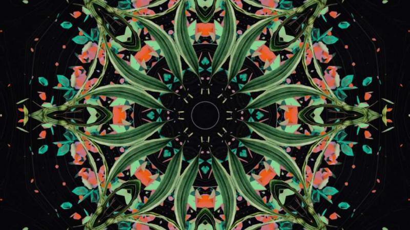 Chìm đắm trong thế giới thực vật cùng album Botanica