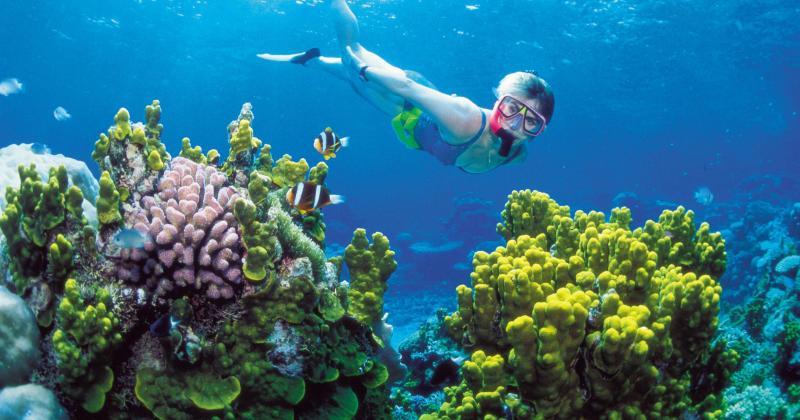 Hawaii cấm các sản phẩm chống nắng có nguy cơ gây hại cho san hô