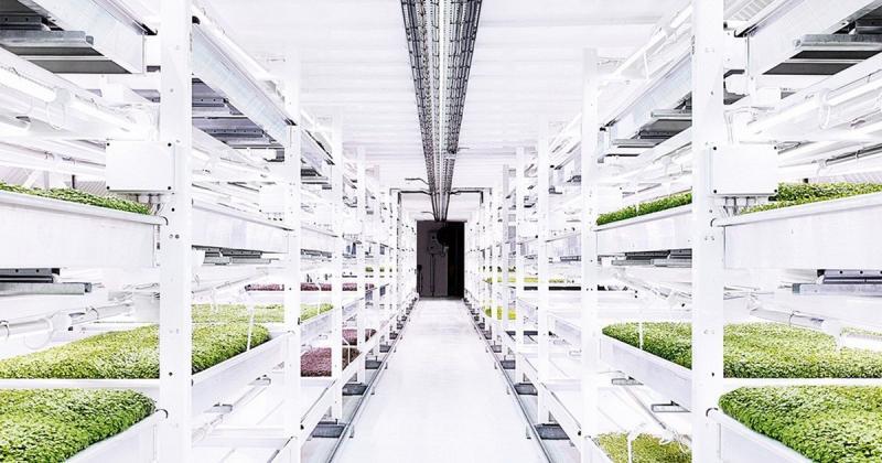 Ở London người ta trồng rau dưới hầm trú bom