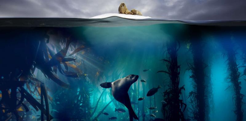 Giờ thì bạn có thể thám hiểm dại dương liên tục 10 tiếng mà không bị gián đoạn trong video Open Ocean