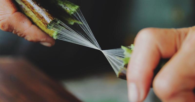 Quy trình kỳ công của kỹ thuật dệt lụa từ tơ sen của nghệ nhân Việt