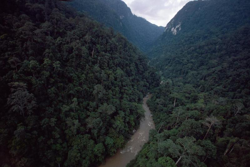 Điện thoại cũ của bạn có thể là chuông cứu hộ cho rừng mưa nhiệt đới