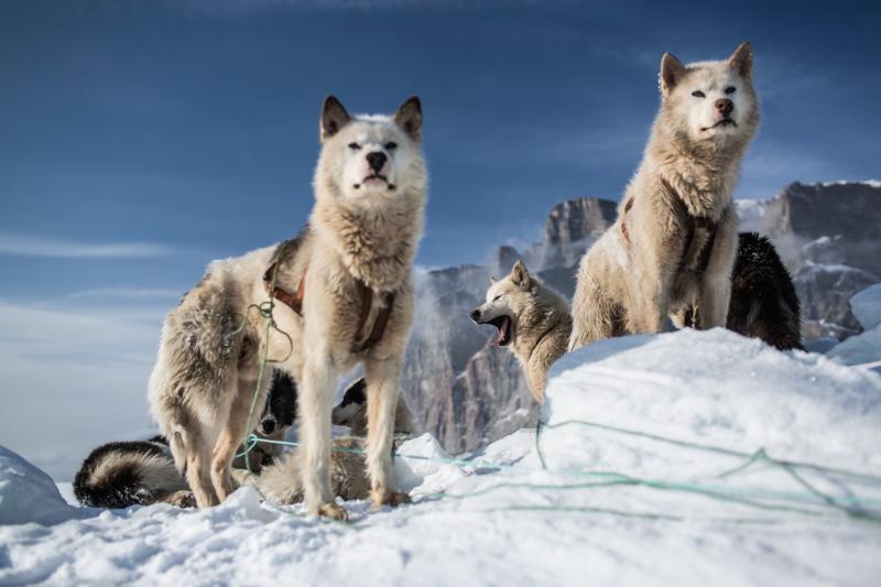Bộ ảnh On Thin Ice khắc hoạ lối sống trên băng đang biến mất