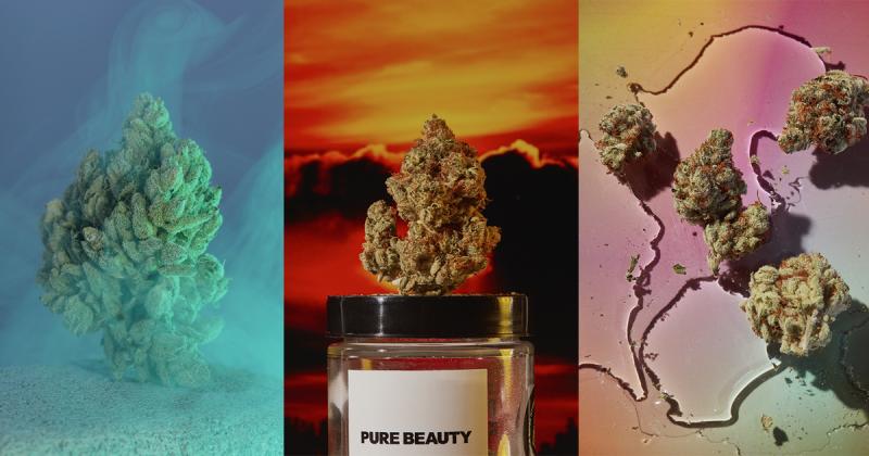 8 sản phẩm tuyệt vời mang đến góc nhìn mới về cần sa