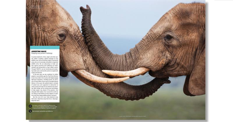 World Wildlife Magazine - Tạp chí bảo tồn thiên nhiên của WWF