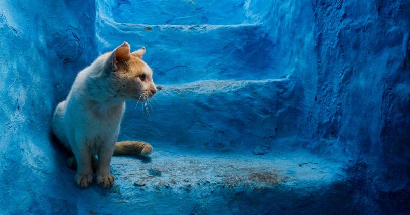 Cảm nhận màu xanh yên bình từ thị trấn miền núi Blue Pearl, Morocco