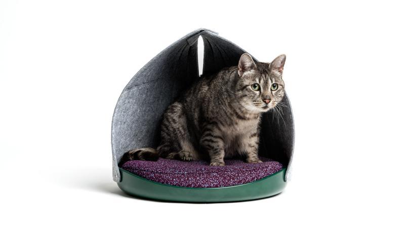 CAT PERSON - nội thất đúc kết từ hành vi của mèo