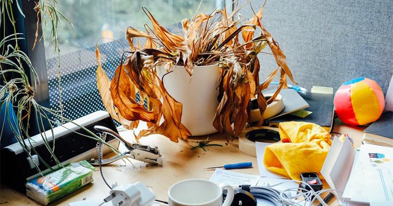 Bộ ảnh về sự u sầu của cây xanh nơi văn phòng, biểu tượng cho nỗi buồn của dịch bệnh