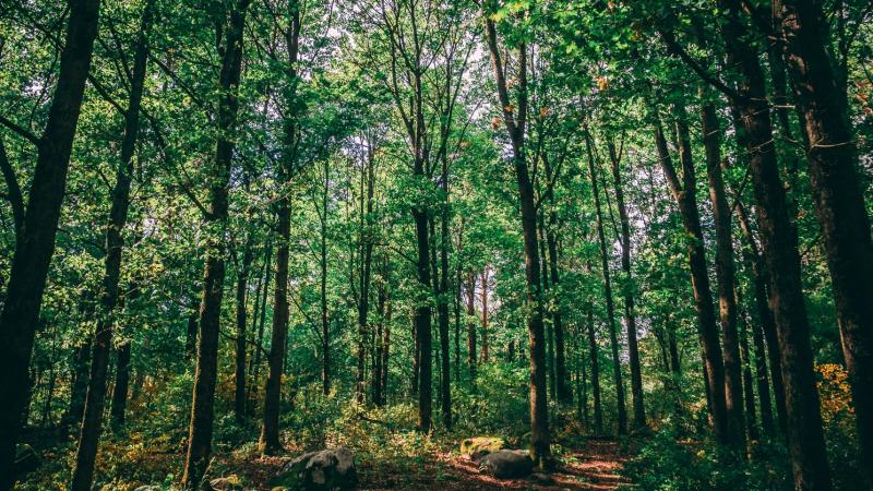 'Sounds of the Forest': Thư viện âm thanh từ những cánh rừng hoang dã trên toàn thế giới