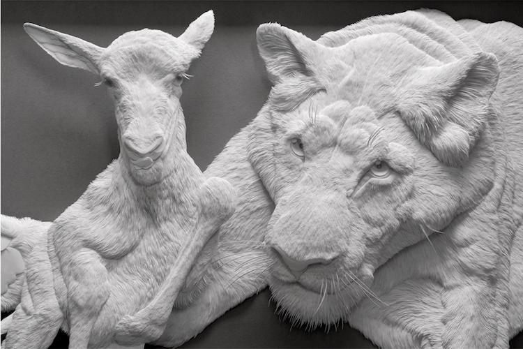 Cận cảnh bộ sưu tập chân dung động vật được chế tác tinh xảo từ giấy của Calvin Nicholls