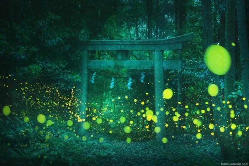 Daniel Kordan hé lộ một khu rừng Nhật Bản đầy mê hoặc được thắp sáng bởi hàng ngàn con đom đóm